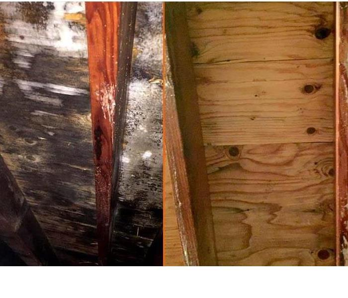 Mold Remediation Harvey Mold Part IV